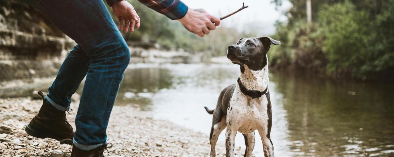 Giv din hund og dig selv frihed og tryghed